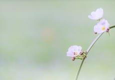 Tono d'annata dei fiori e del fondo confuso della natura Immagini Stock Libere da Diritti