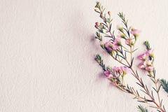 Tono d'annata dolce del fiore Fotografie Stock