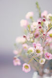 Tono d'annata dolce del fiore Fotografia Stock