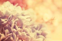 Tono d'annata dolce del fiore Immagini Stock