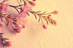 Tono d'annata dolce del fiore Immagine Stock
