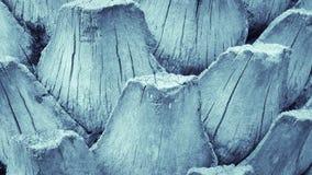 Tono del azul del fondo de la textura del modelo de la fronda de la palma Fotos de archivo libres de regalías