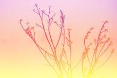 Tono del dulce de la rama Foto de archivo libre de regalías
