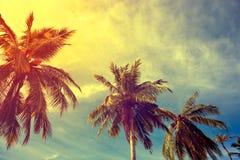 Tonować roczników drzewka palmowe Obrazy Stock