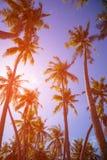 Tonować roczników drzewka palmowe Fotografia Stock