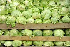 Tons Of Cabbage Stock Photo