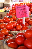 Tons of Home Grown Tomatoes Royalty Free Stock Photos