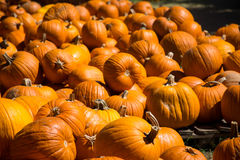 Tons of Pumpkins at Halloween Pumpkin Patch in Round Rock , Texas. Large Selection of Pumpkins at Halloween Pumpkin Patch in Round Rock , Texas Royalty Free Stock Images