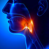 Tonsillar - angina pectoris Fotografering för Bildbyråer
