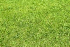 Tonsure lawn Stock Photo
