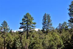 Tonto国家森林,高速公路87,亚利桑那U S 农业部,美国 免版税图库摄影