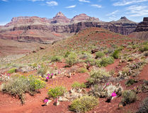 Tonto East Trail Stock Image