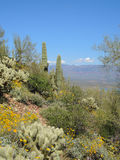 Tonto Hillside FLora Royalty Free Stock Images