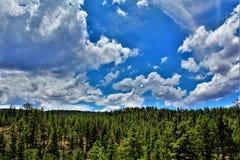 Tonto Nationaal Bos, de Afdeling van Arizona, Verenigde Staten van Landbouw stock foto's