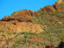 Tonto National Forest royalty free stock photography