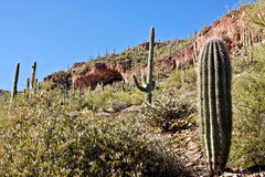 Tonto National Monument Stock Photos