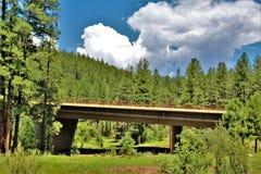 Tonto nationalskog, Arizona U S Jordbruksavdelningen Förenta staterna fotografering för bildbyråer