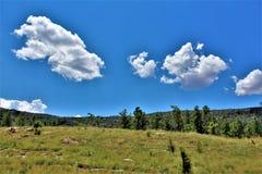 Tonto nationalskog, Arizona U S Jordbruksavdelningen Förenta staterna arkivbild