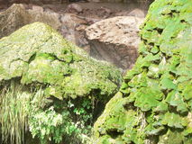 Tonto Natural Bridge Moss Rocks Stock Image