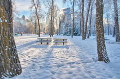 Too Cold for a Picnic. Picnic tables in a sunbeam in Prince's Island Park Royalty Free Stock Image