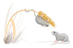 Too heavy weight mouse. Has some problems with the corn. It needs a diet Stock Photos