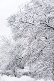Too much snow Royalty Free Stock Photos