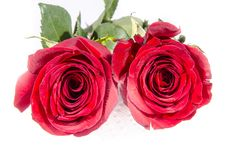 It is the too red roses opened up. A rose is a woody perennial flowering plant of the genus Rosa, in the family Rosaceae, or the flower it bears. There are over stock photos