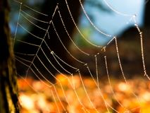 Too wet for the spider. Abandoned spider web in a park. Did the mist and dampness chase away the builder of this masterpiece stock photos