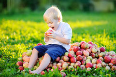 Toodler boy sitting on heap of apples in domestic garden Royalty Free Stock Image
