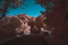 Surreal path in infrared colors. Took with IR 650nm, tree path in a outdoor park, surrounded by lots of trees, dreamy colors Royalty Free Stock Photography