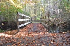 In the woods, Noordoostpolder, Netherlands royalty free stock photography