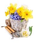 Tool for floriculture and flower in wicker basket Royalty Free Stock Images