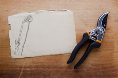 Tool for pruning Stock Photo