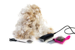 Tools for grooming the dog Stock Photo