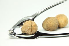 Tools of kitchen. Useful tools for the walnut Royalty Free Stock Photography