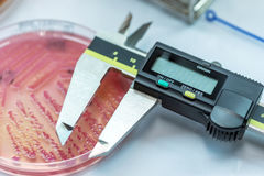 The Tools for measuring zone size of bacteria as sub sensitivity. Test for laboratory in the hospital Stock Photo