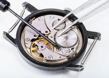 Tools on open repaired watch close up Stock Image