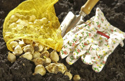 Tools to plant bulbs Stock Photos