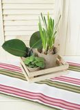 Tools for transplanting plants.Happy Easter.Narcisse, ficus and succulents in pots. Wooden background. Brown, green, pink and beige colors Stock Photos