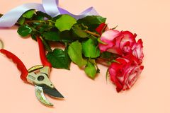 Beautiful flowers and florist equipment on pink background royalty free stock photos