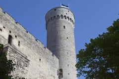 Toompea Castle on Toompea hill Tall Hermann tower. Tallinn, Estonia.  Stock Photos