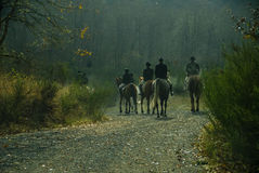 Toon de Club van de Jacht van het Paard stock foto