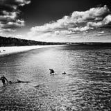 Toon de honden van de waterredding Artistiek kijk in zwart-wit Stock Afbeeldingen