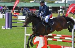 Toon het Springen Paard en Ruiter Royalty-vrije Stock Foto's