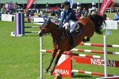 Toon het Springen Paard en Ruiter Stock Foto's