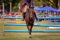 Toon Jumper Competing Hurdles At een Land toont stock foto's