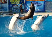 Toon met dolfijnen yalta crimea Royalty-vrije Stock Afbeeldingen