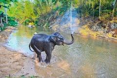 Toon Olifantsbad op 14 Maart, 2012.in Thailand Royalty-vrije Stock Foto's