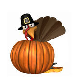 Toon Thanksgiving Turkey in Pumpkin. Toon Thanksgiving Turkey wearing a Pilgrim hat popping out of a pumpkin.  Isolated Royalty Free Stock Image