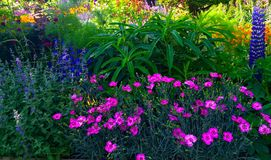 Toon Tuin met de Zomerbloemen Stock Foto